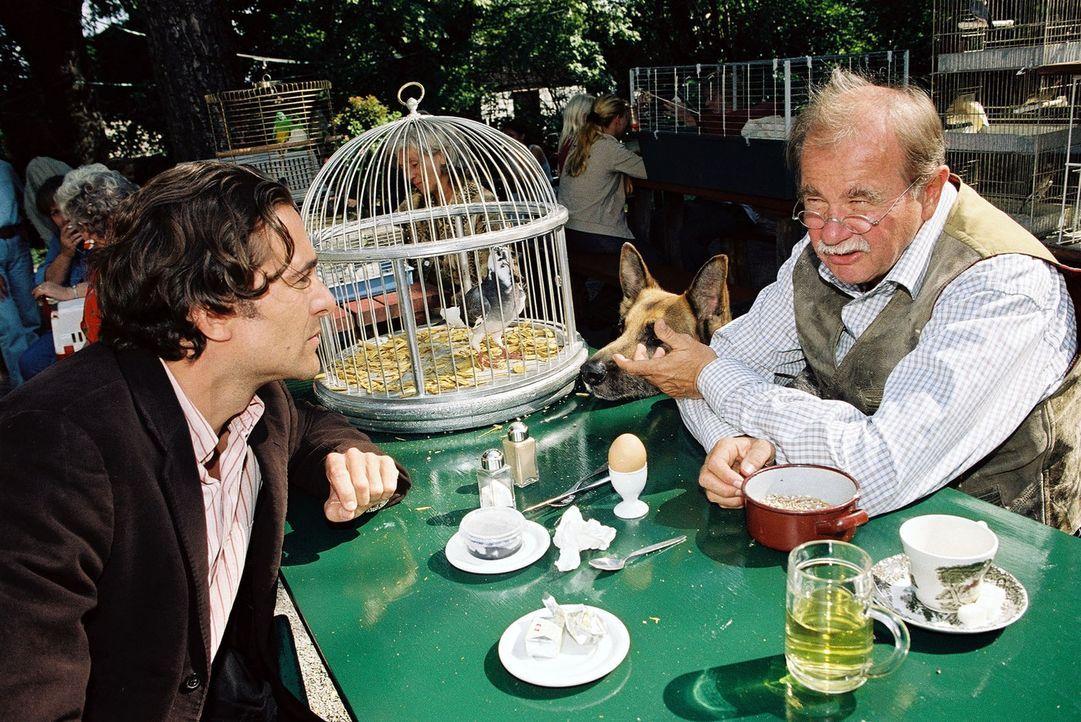 Im Zuge der Ermittlungen im Taubenzüchtermilieu erfährt Marc (Alexander Pschill, l.) von Anton Pischinger (Ernst Konarek, r.), dass einige Jungtau... - Bildquelle: Sat.1
