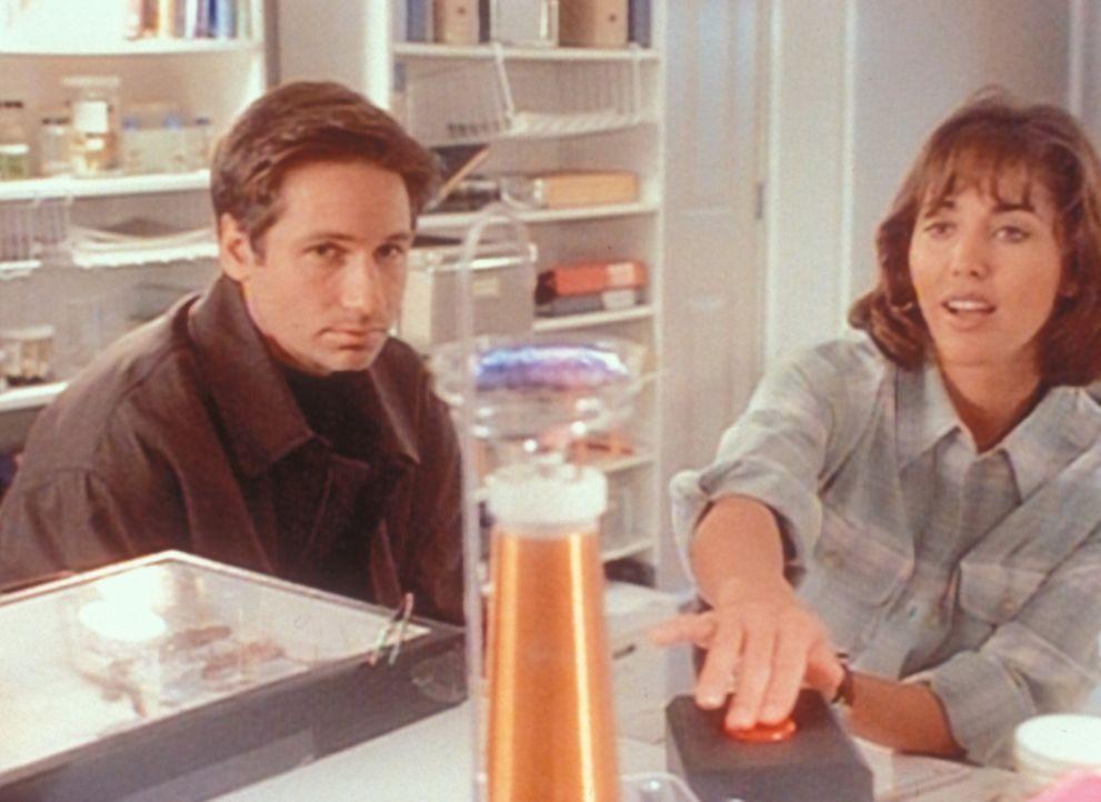 Mulder (David Duchovny, l.) lässt sich von der jungen Entomologin Dr. Bambi Berenbaum (Bobbie Phillips, r.) über die spezifischen Eigenschaften von... - Bildquelle: TM +   2000 Twentieth Century Fox Film Corporation. All Rights Reserved.