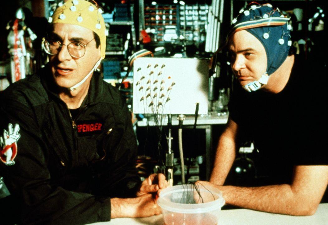 Dr. Spengler (Harold Ramis, l.) und Dr. Stantz (Dan Aykroyd, r.) führen mit dem gefundenen rosa Schleim experimentelle Feldversuche durch: Sie entd... - Bildquelle: 1989 Columbia Pictures Industries, Inc. All Rights Reserved.