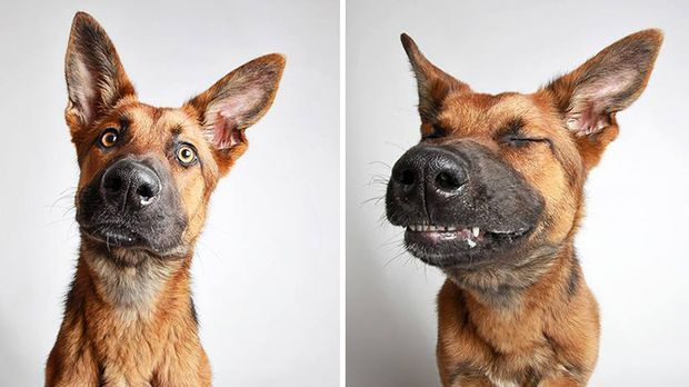 adopted-dog-teton-pitbull-humane-society-utah-23