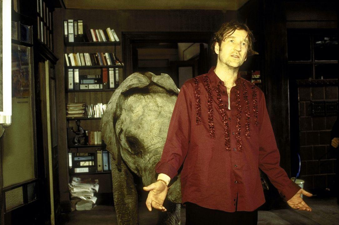 Tierasyl: Als der Trompeter Lennard (Peter Lohmeyer) nach einer durchzechten Nacht aufwacht, liegt ein kleiner Elefant neben ihm ... - Bildquelle: Leslie Haslam ProSieben