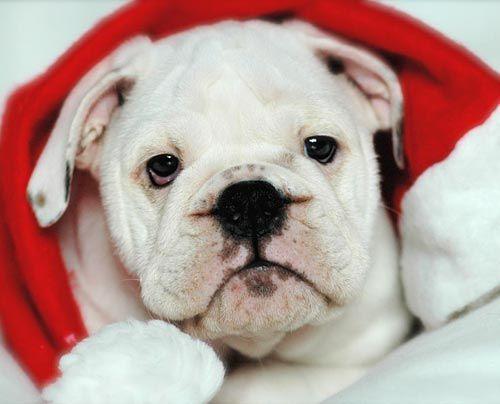 fruehstuecksfernsehen-studiohund-lotte-baby-019 - Bildquelle: Stefan Pulvermüller