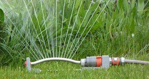 Zum Schluss den Rasen noch ordentlich wässern, um die Spuren des Vertikutiere...