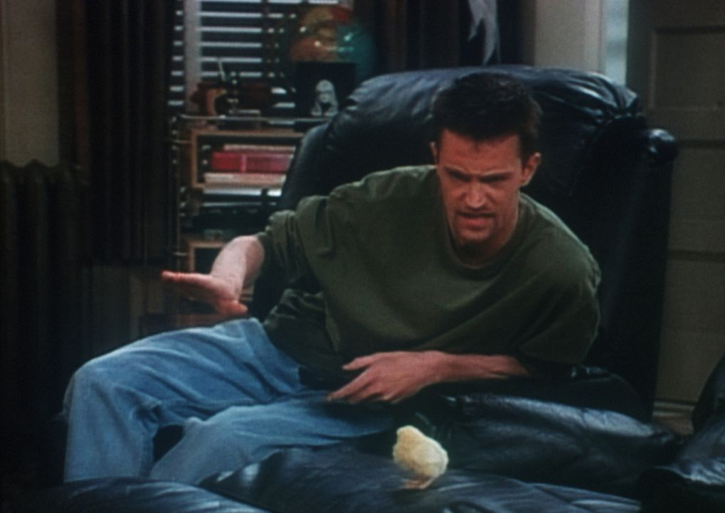 Chandler (Matthew Perry) hat ein neues Haustier ... - Bildquelle: TM+  2000 WARNER BROS.