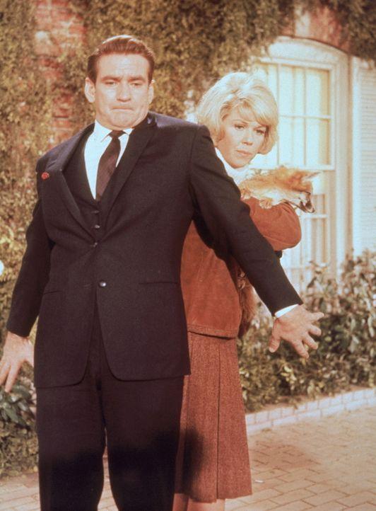 Ihr junges Glück ist gefährdet: Janet (Doris Day, r.) und Mike (Rod Taylor, l.) ...