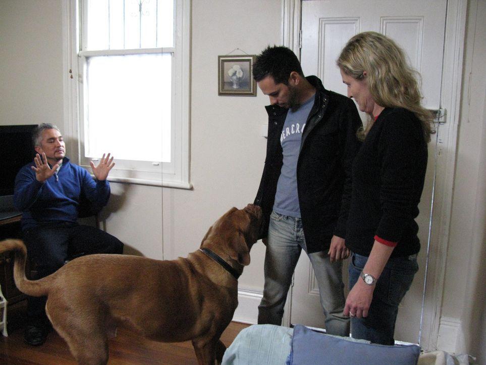 Cesar Millan (l.) macht sich auf den Weg nach Australien, um verzweifelten Hundebesitzern zu helfen und deren Vierbeiner von kleinen und großen Neu... - Bildquelle: 2014 Rive Gauche Television. All rights reserved.