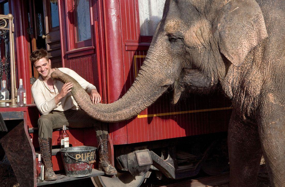Durch Zufall gerät der junge Tierarzt Jacob (Robert Pattinson) zu einem Wanderzirkus. Dort soll er sich um die Tiere kümmern, insbesondere um die El... - Bildquelle: David James 2011 Twentieth Century Fox Film Corporation. All rights reserved.