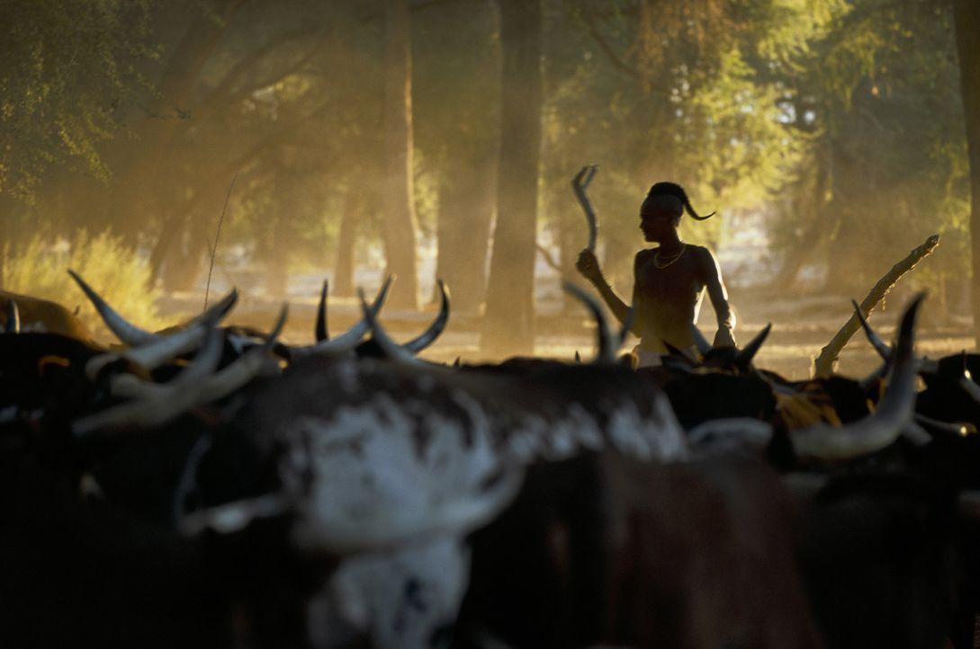 Als die die 14-jährige Grace dringend Hilfe benötigt, findet sie große Unterstützung bei dem Volk der Ovahimba ... - Bildquelle: Gaumont