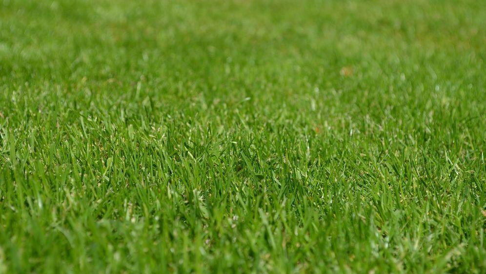 Dünenlandschaft Im Garten Anlegen trockenrasen anlegen pflegeleicht sat 1 ratgeber