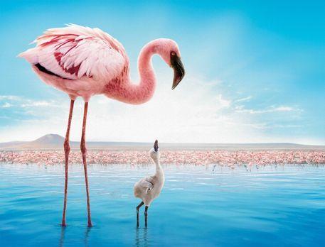 Das Geheimnis der Flamingos - DAS GEHEIMNIS DER FLAMINGOS - Artwork - Bildque...
