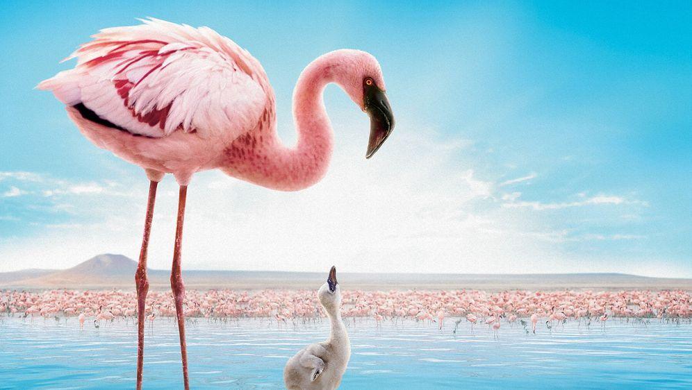 Das Geheimnis der Flamingos - Bildquelle: Disney Enterprises, Inc.  All rights reserved.