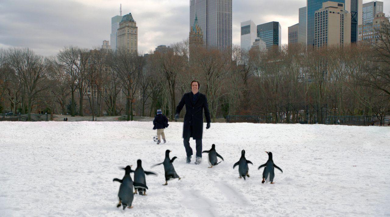 Der Geschäftsmann Tom Popper (Jim Carrey, r.) hat sechs niedliche Pinguine, die sein Leben ordentlich auf den Kopf stellen. Obwohl die kleinen Tier... - Bildquelle: 2011 Twentieth Century Fox Film Corporation. All rights reserved.