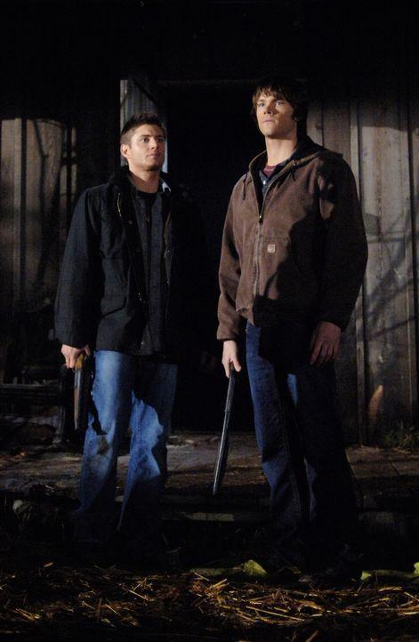 Sam (Jared Padalecki, r.) und Dean (Jensen Ackles, l.) untersuchen ein Geisterhaus, welches von einem Geist namens Mordechai heimgesucht wird ... - Bildquelle: Warner Bros. Television