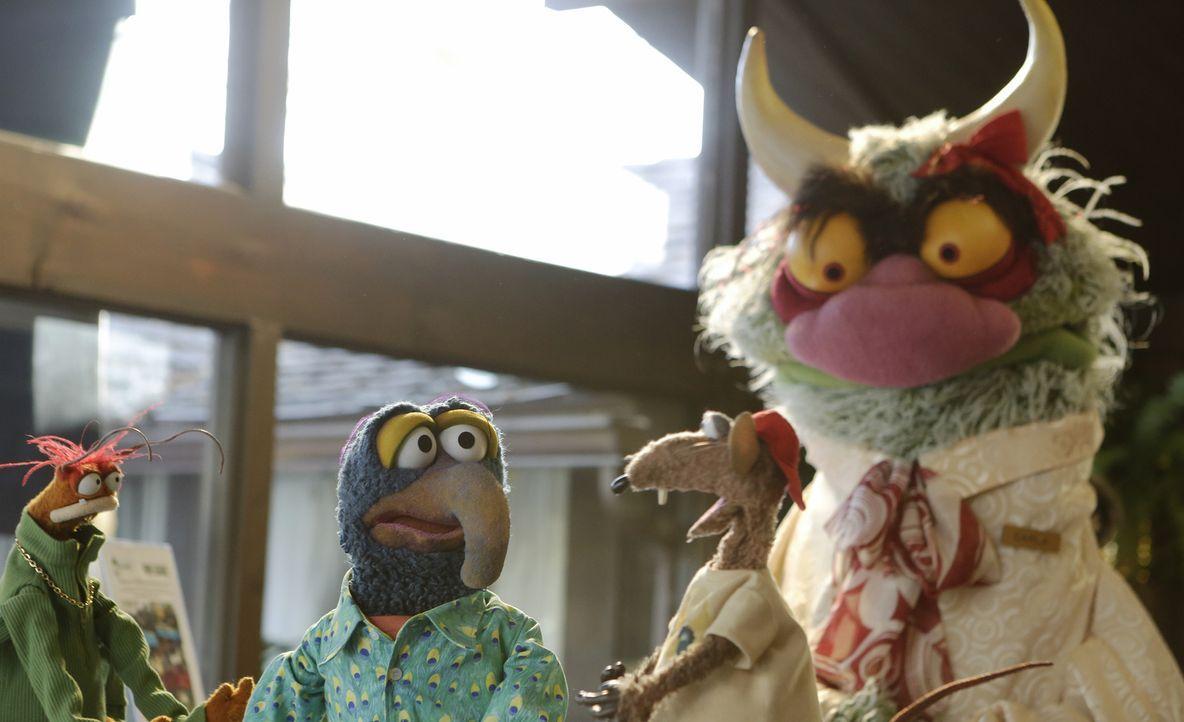 Überlegen, ob sie zusammen ziehen sollen: Pepe (l.), Gonzo (2.v.l.), Rizzo (2.v.r.) und Carl (r.) - Bildquelle: Nicole Wilder ABC Studios
