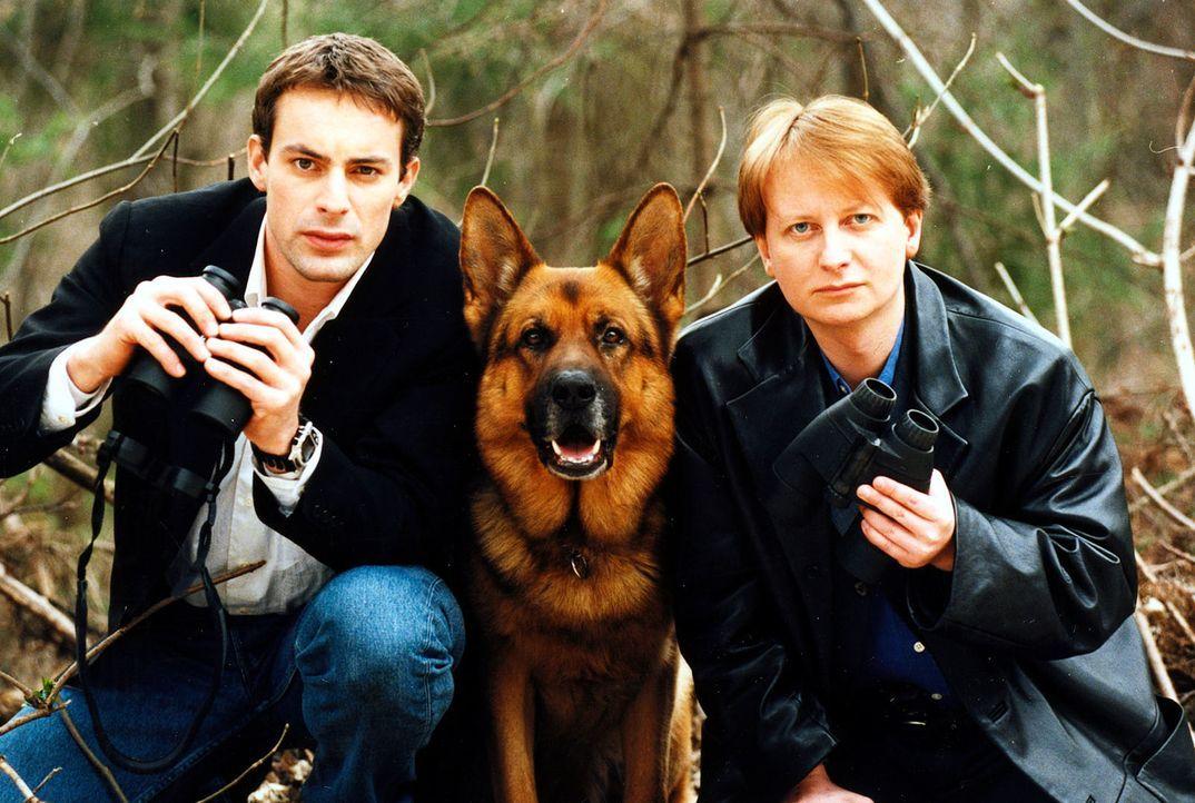 (5. & 6. Staffel) - Kommissar Brandtner (Gedeon Burkhard, l.), Kriminalinspektor Christian Böck (Heinz Weixelbraun, r.) und Polizeihund Rex lieben W... - Bildquelle: Ali Schafler Sat.1