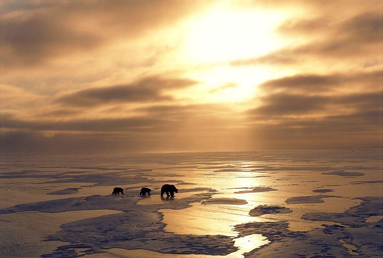 Mit den ersten Strahlen der Frühlingssonne erwacht in der Arktis eine Eisbärenfamilie. Ausgehungert und nur noch halb so schwer wie vor der Winter... - Bildquelle: Photolibrary
