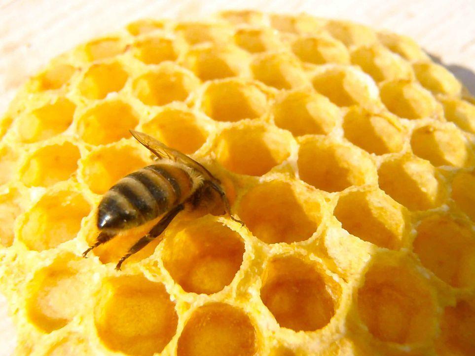 Bienen sind wichtige Bestandteile des sensiblen Ökosystems in dem wir leben und trotzdem nimmt das Bienensterben kein Ende. Eine gefährliche Entwick... - Bildquelle: ProSieben