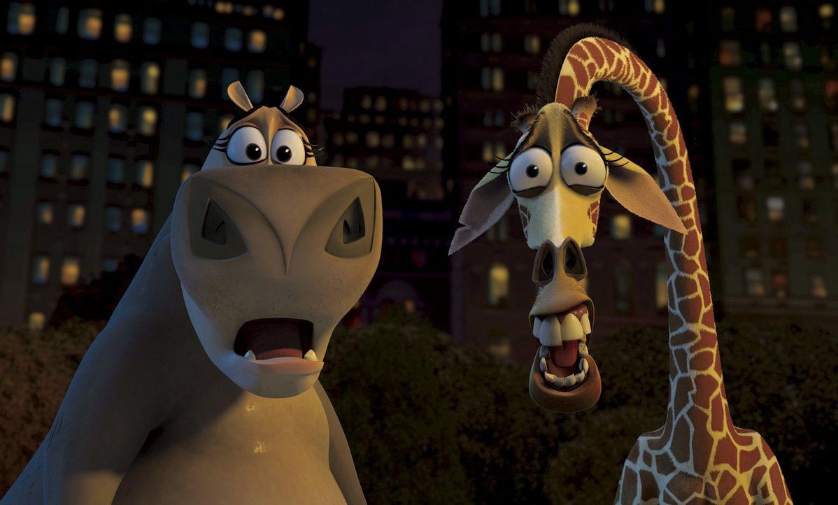 Als das Zebra Marty eines Nachts spurlos verschwindet, machen sich Melman, Gloria und Alex im Großstadtdschungel New Yorks auf die Suche nach dem A... - Bildquelle: TM &   2004 DREAMWORKS ANIMATION SKG.