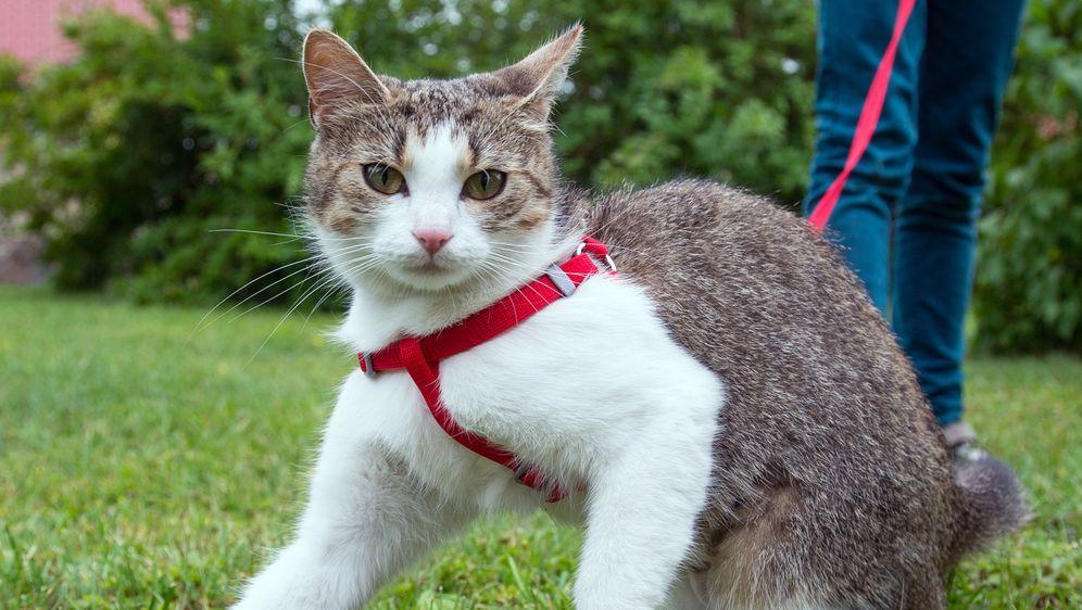 Katzenhaltung - Bildquelle: dpa
