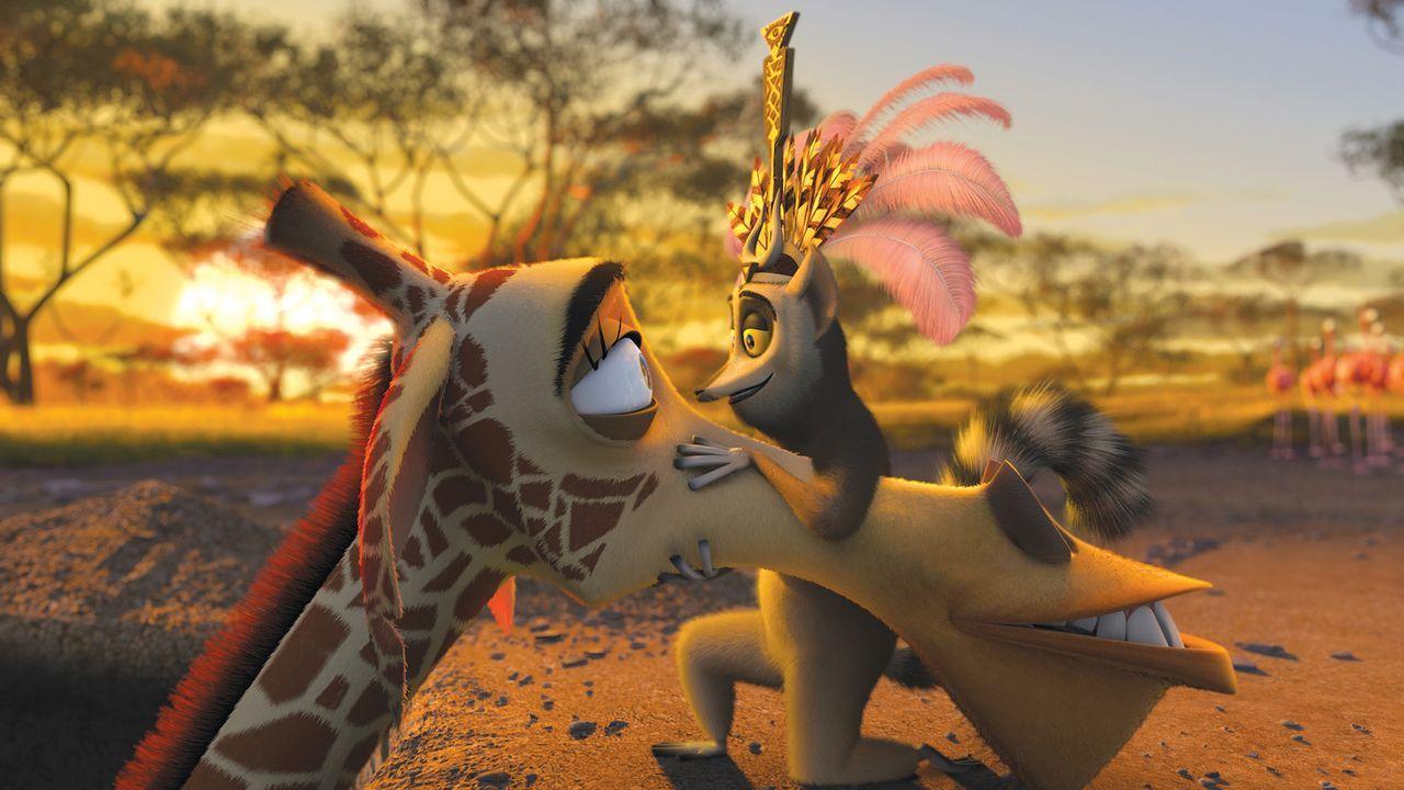Giraffe Melman (l.) wollte mit seinen drei Freunden nach New York zurück. Doch sie landen stattdessen in Afrika und dort erwarten sie neue Abenteue... - Bildquelle: (2008) DREAMWORKS ANIMATION LLC. ALL RIGHTS RESERVED.