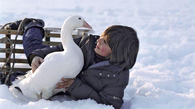 Der zwölfjährige Rudi (Markus Krojer) lebt mit seinen Eltern auf einem Bauern...