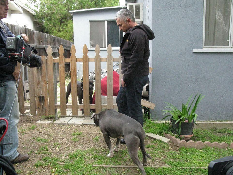 Heute kümmert sich Cesar mal nicht um Hunde, sondern um Menschen, die panische Angst vor seinen Lieblingsklienten haben. - Bildquelle: Ryan Cass MPH - Emery/Sumner Joint Venture