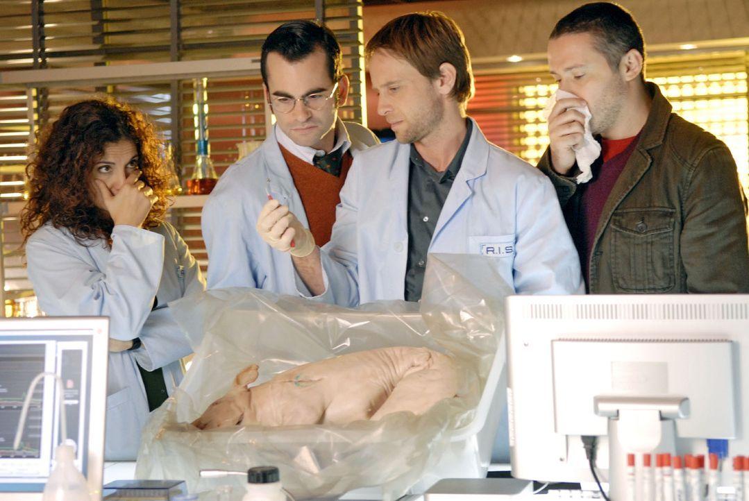 Mit ungewöhnlichen Methoden und der Hilfe eines Schweinekopfs versucht Philip herauszufinden, wie lange die Tote im Grab gelegen hat. v.l.n.r.: Judi... - Bildquelle: Christoph Assmann Sat.1