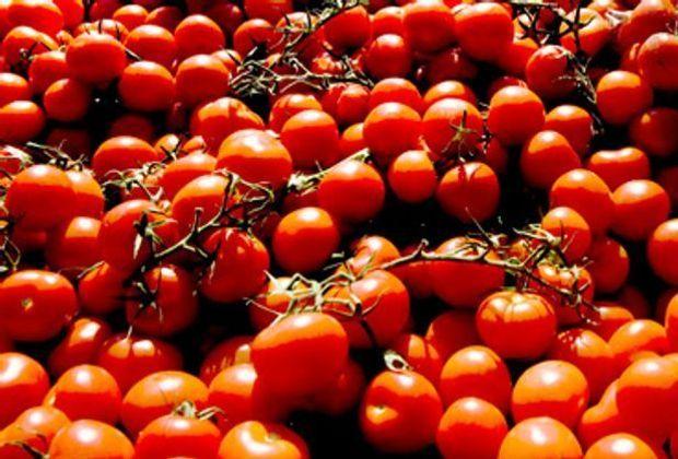 fruehstuecksfernsehen-rezepte-tomaten-allgemein-2011-620_250-afp