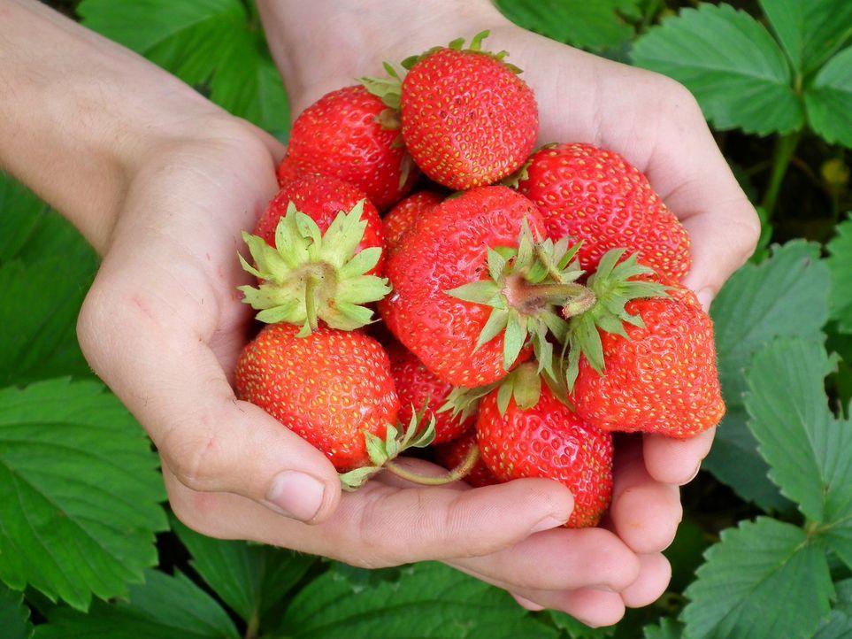 Tipp 9: Erdbeeren pflückenSchnappt euch das Fahrrad und ab ins Erdbeerfeld! ...