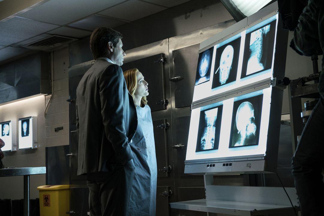Selbstmord oder Mord? Mulder (David Duchovny, l.) und Scully (Gillian Anderson, r.) erkennen schnell, dass hinter dem Tod eines Wissenschaftlers vie... - Bildquelle: Ed Araquel 2016 Fox and its related entities.  All rights reserved.