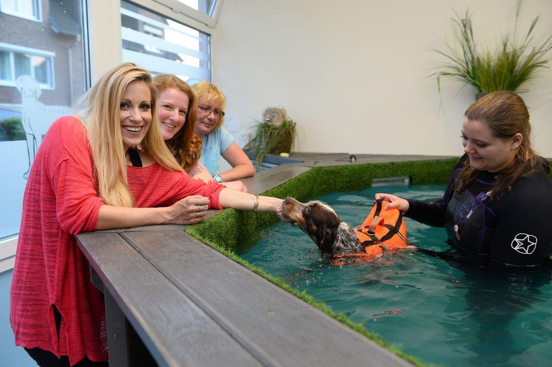 Moderatorin Andrea Kaiser (l.) erlebt tierisch süßen Badespaß beim Welpenschwimmen! - Bildquelle: Willi Weber SAT.1