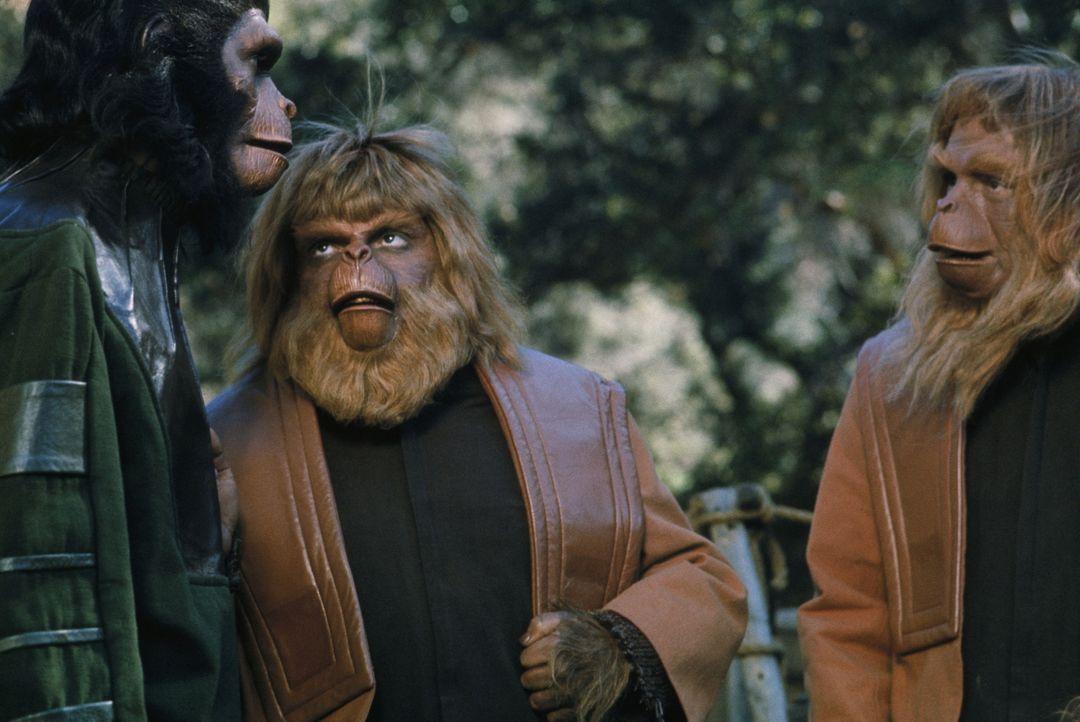 Nachdem die Erde durch einen Atomkrieg verwüstet wurde, haben Affen unter Führung des friedliebenden Caesar (Roddy McDowall, l.) die Herrschaft über... - Bildquelle: 20TH CENTURY FOX FILM CORPORATION