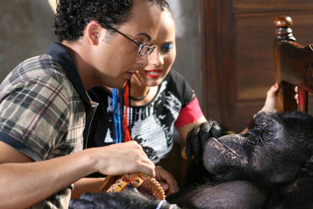Haben einen liebestollen Affen am Hals: Moes (Jon Karthaus, l.) und Taffie (Monique van der Werff, r.) ...