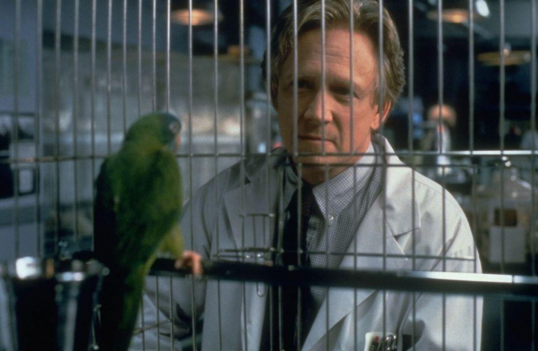 Der Verhaltensforscher Dr. Reingold (Bruce Davison, r.) sieht seine große Chance gekommen, als er Paulie (l.) gefangen nehmen kann. Doch der kluge V... - Bildquelle: DreamWorks