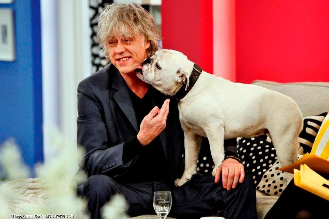 fruehstuecksfernsehen-studiohund-lotte-in-action-im-studio-115