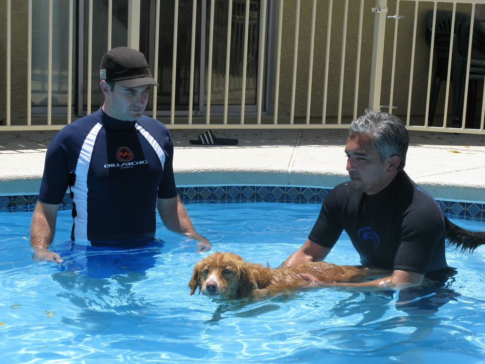 Der Hundeflüsterer Cesar Millan (r.) kümmert sich unter anderem um die kanadische Retrieverdame, die panische Angst vor Wasser hat. - Bildquelle: Rive Gauche Intern. Television