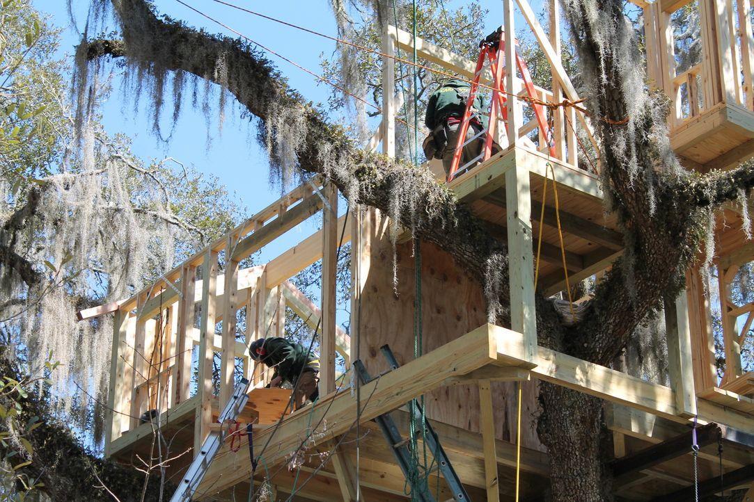 In einer hundert Jahre alten Eiche soll ein riesiges Baumhaus entstehen. Ein Auftrag, der jede Menge Arbeit für die Treehouse Guys bedeutet ... - Bildquelle: 2015, DIY Network/Scripps Networks, LLC. All Rights Reserved.