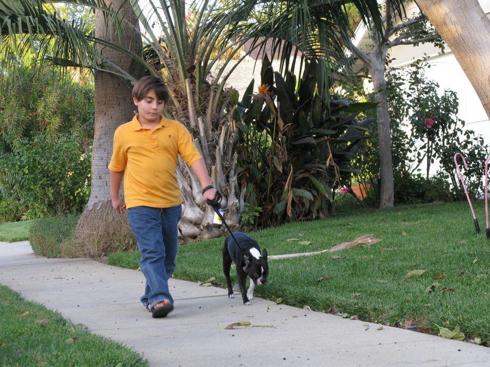 Der Boston Terrier Bella macht Familie Alesna das Leben schwer. Ryan (Bild) hofft, dass der Hundeflüsterer Cesar Millan helfen kann ... - Bildquelle: Rive Gauche Intern. Television
