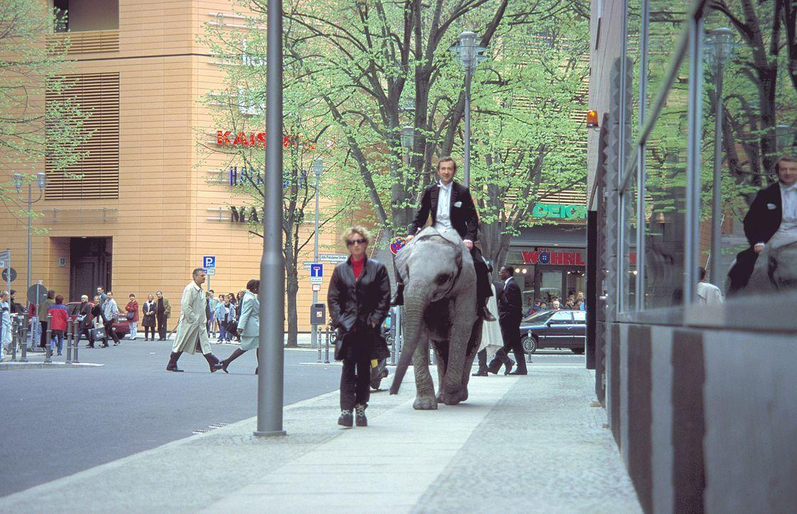 Eigentlich möchte der Trompeter Lennard (Peter Lohmeyer) den Elefanten so schnell wie möglich wieder loswerden ... - Bildquelle: Leslie Haslam ProSieben