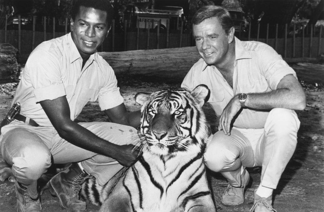 Ein Leben für die Tiere: Dr. Marsh Tracy (Marshall Thompson, r.) und Mike (Hari Rhodes, l.) ... - Bildquelle: 2007 Warner Bros. All Rights Reserved.
