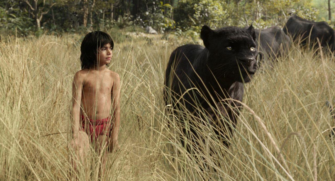 Der kleine Menschenjunge Mogli (Neel Sethi) ist im Dschungel aufgewachsen. Als ihm plötzlich große Gefahr droht, geleitet sein Freund Baghira ihn ra... - Bildquelle: Disney Enterprises, Inc. All Rights Reserved.