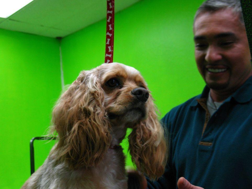 Hundeflüsterer Cesar Millan hilft heute Wes Murph, der einen schicken Hundesalon in Kalifornien eröffnet hat. - Bildquelle: Rive Gauche Intern. Television