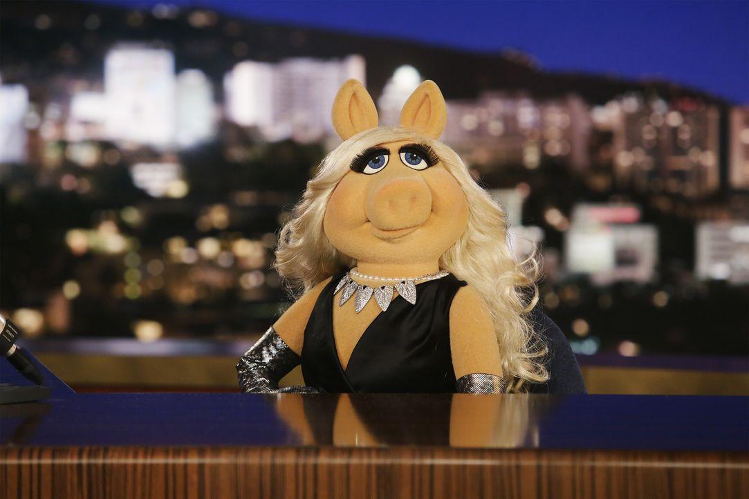"""Kommt nicht damit klar, dass ihr Reese Witherspoon die weibliche Hauptrolle in """"Walk the Line"""" vor der Nase weggeschnappt hat: Miss Piggy ... - Bildquelle: Nicole Wilder ABC Studios"""