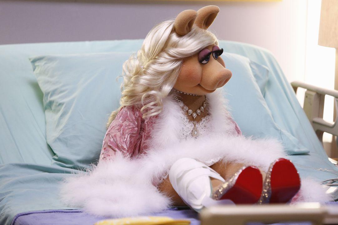 Wird die Show von Miss Piggy aus dem Krankenhaus ein Erfolg werden? - Bildquelle: ABC Studios
