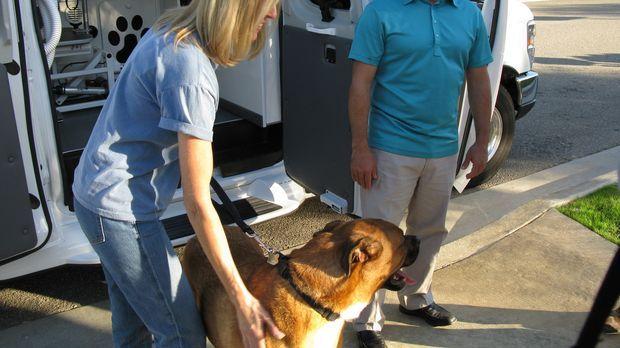 Die Hundestylistin Lauren (l.) braucht dringend die Hilfe von Hundeflüsterer...