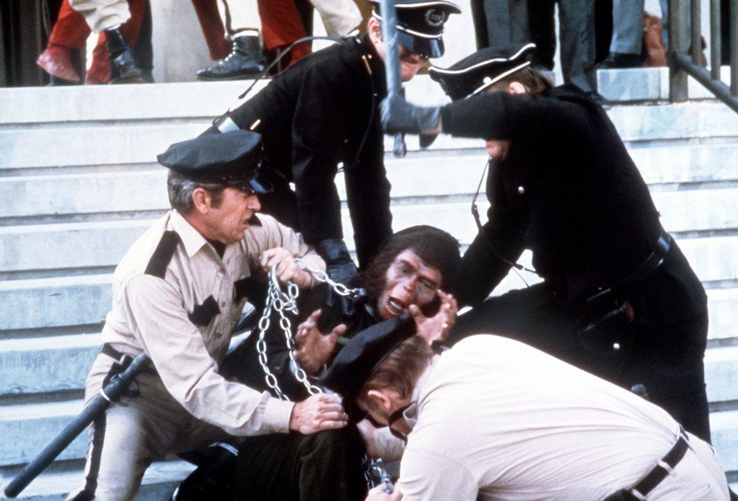 Cäsar (Roddy McDowall) wird gefangengenommen ... - Bildquelle: Twentieth Century-Fox Film Corporation