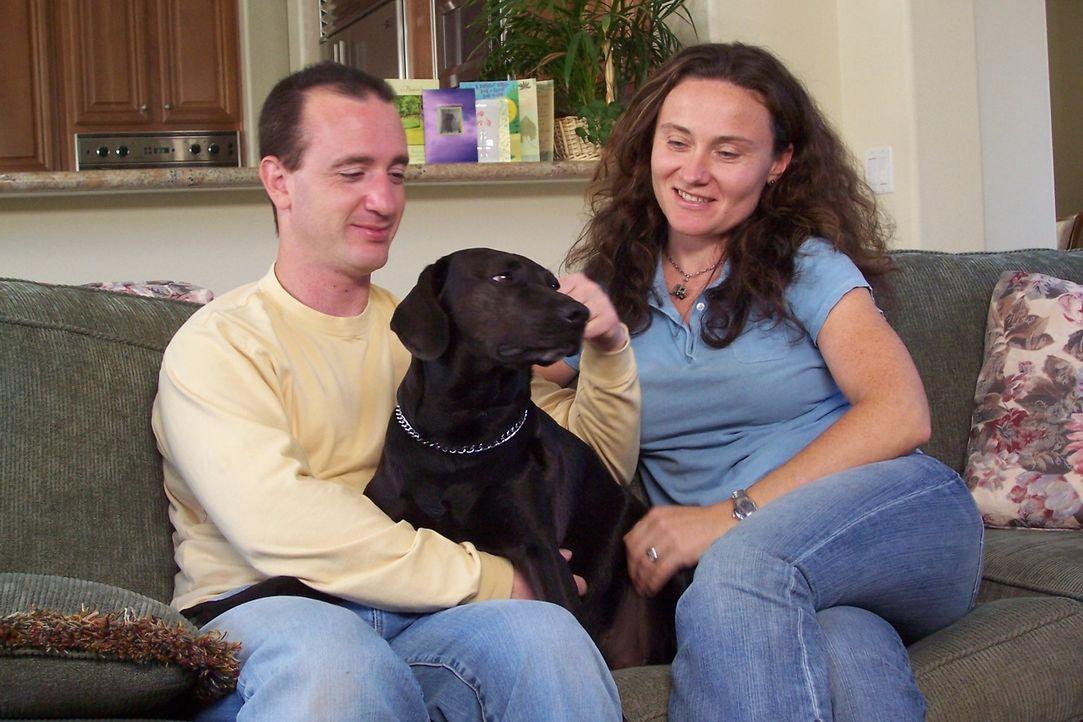 Beagle-Mischling Pasha hat offensichtlich soziale Probleme: Sie erträgt keine anderen Hunde in ihrem Umfeld und auch Kindern gegenüber verhält sie s... - Bildquelle: Rive Gauche Intern. Television