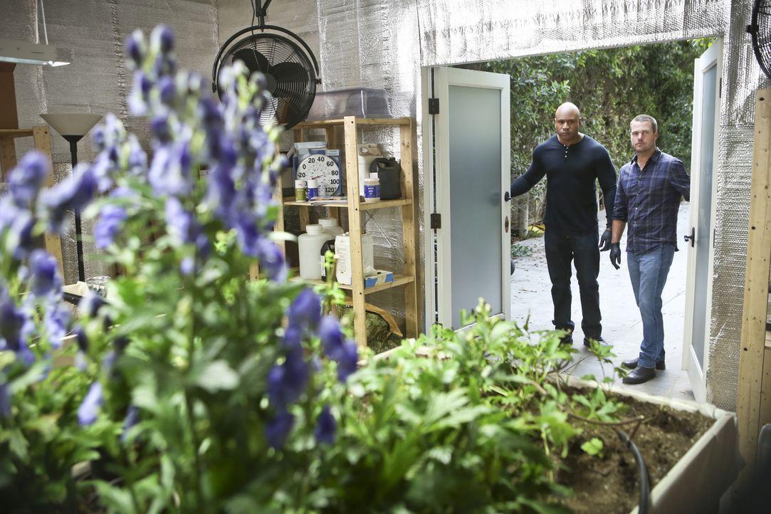 Versuchen herauszufinden, wer Granger vergiftet hat: Callen (Chris O'Donnell, r.) und Sam (LL Cool J, l.) ... - Bildquelle: CBS Studios Inc. All Rights Reserved.