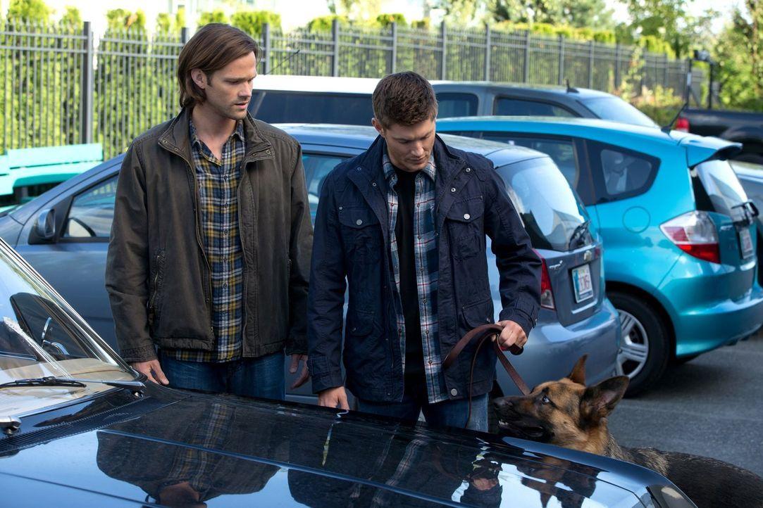 Zwei bizarre Mordfälle treiben Sam (Jared Padalecki, l.) und Dean (Jensen Ackles, r.) zu ungewöhnlichen Ermittlungsmethoden ... - Bildquelle: 2013 Warner Brothers