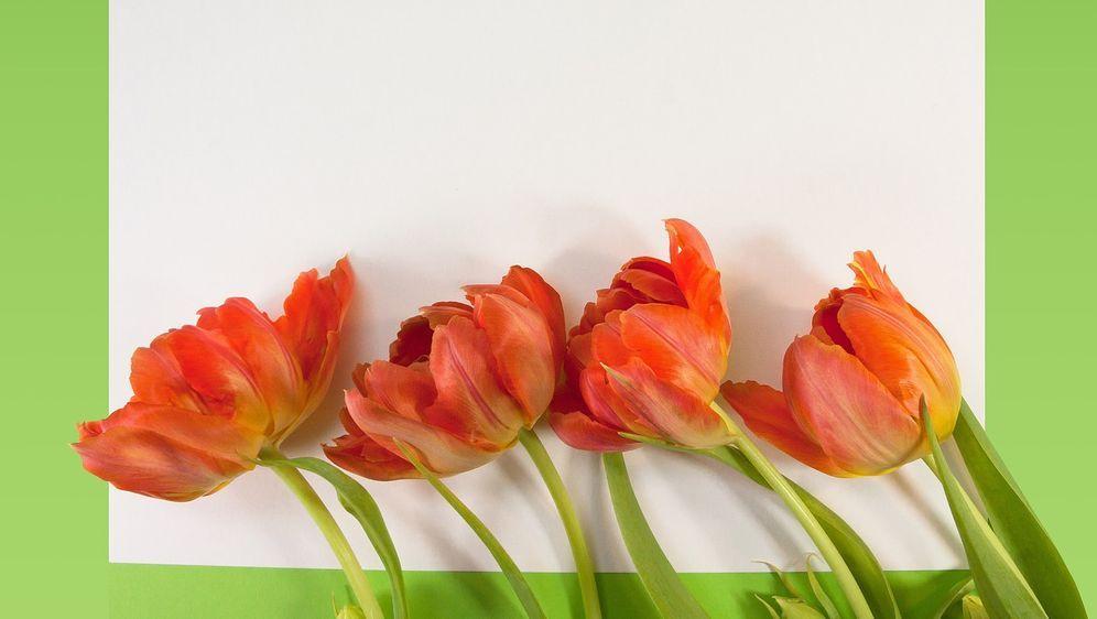 Tulpen malen von Kopf bis Stiel: Tipps - Bildquelle: Pixabay.com